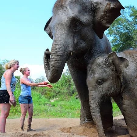 elephant retirement park chiang mai