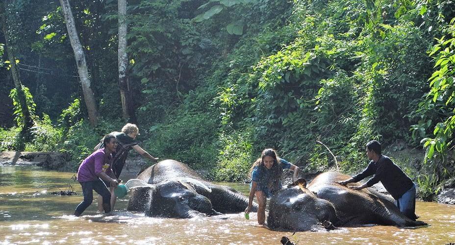 chiang mai elephant care toto