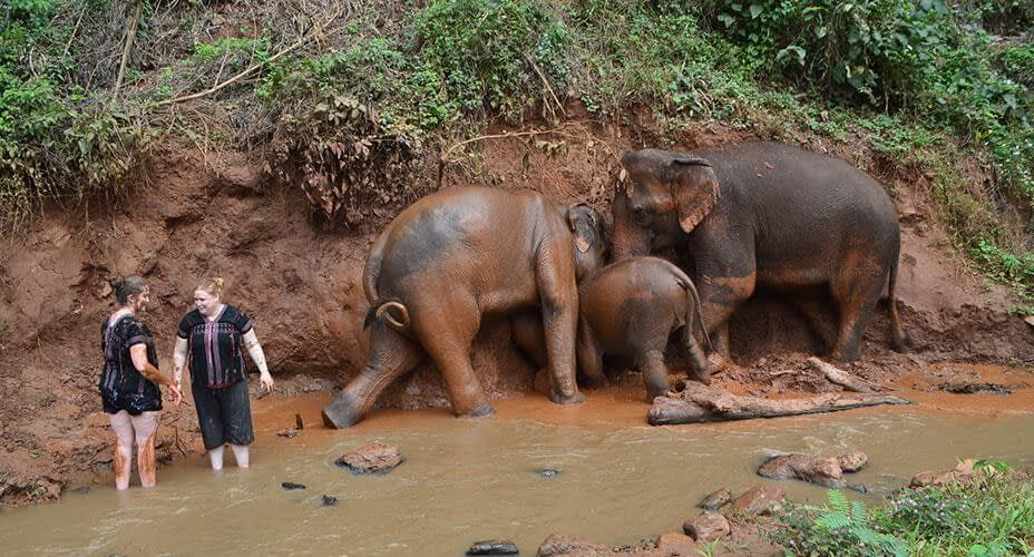 elephant bathing chiang mai excursion