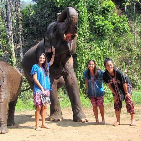 elephant care chiang mai