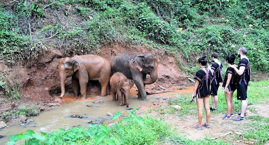 elephant care at toto elephant sanctuary