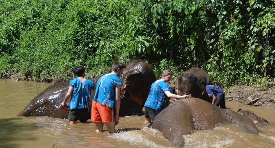 elephant bathing chiang mai