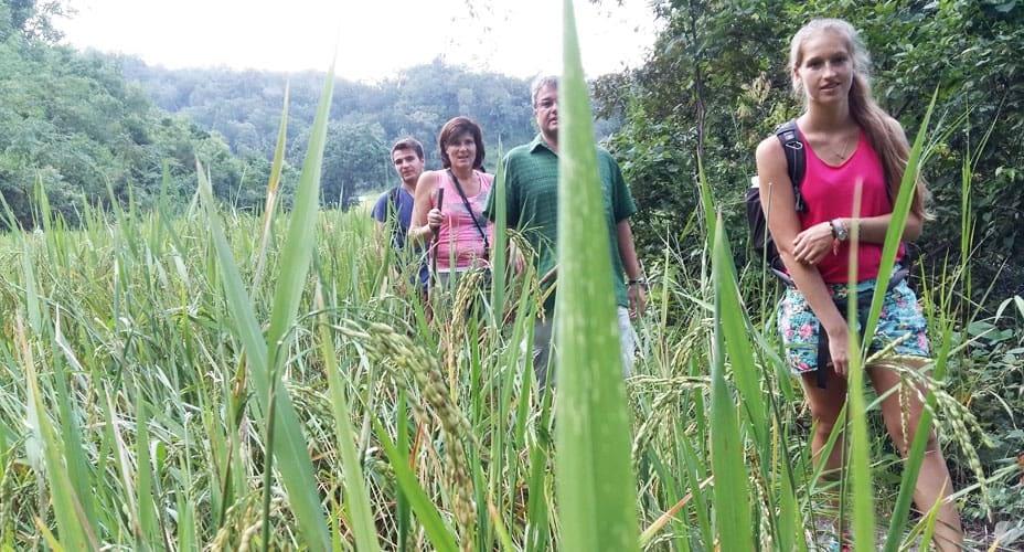trekking adventure mae wang from chiang mai