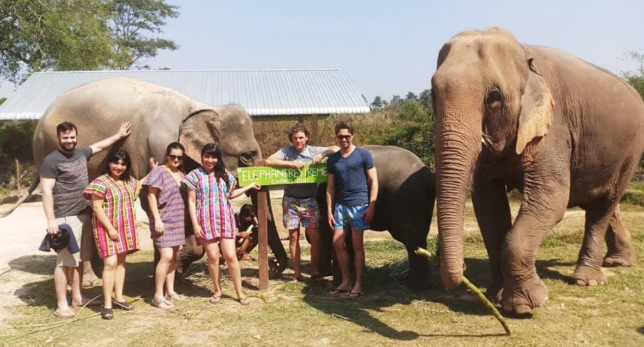 elephant hug treatment chiang mai tours