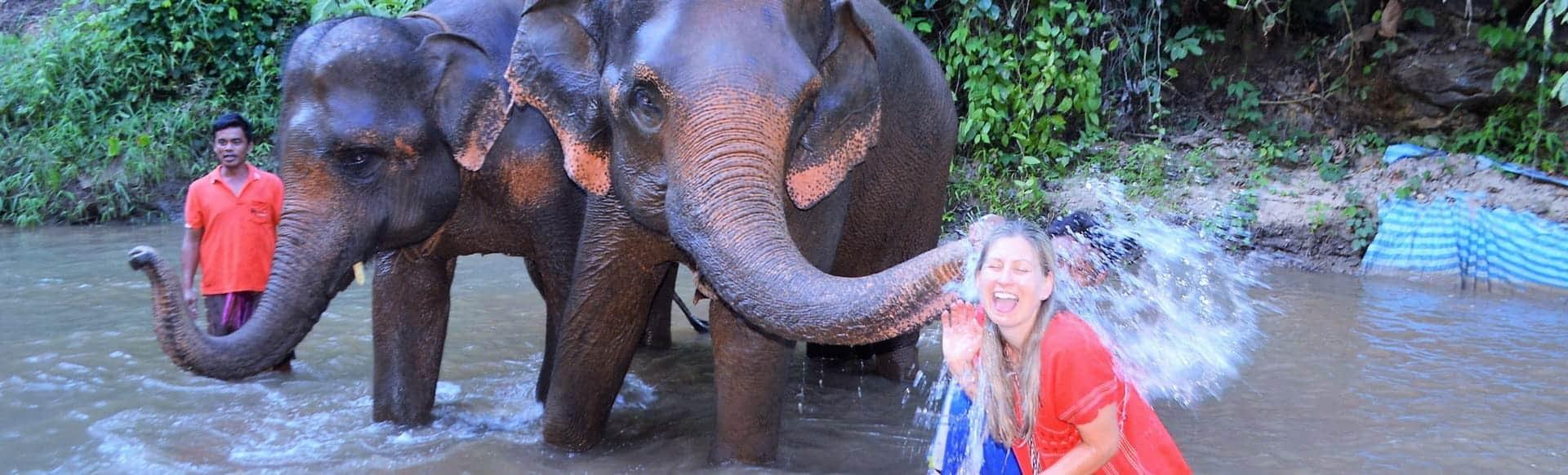 toto elephant hug chiang mai