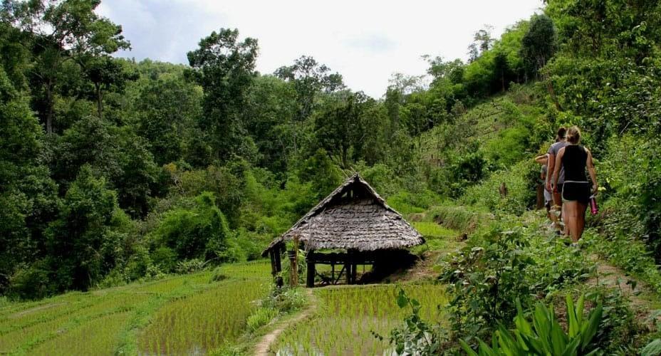 trekking tour from chiang mai to mae wang