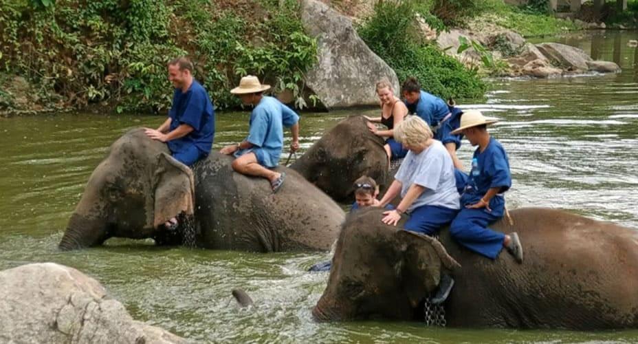 elephant trek chiang mai mae wang
