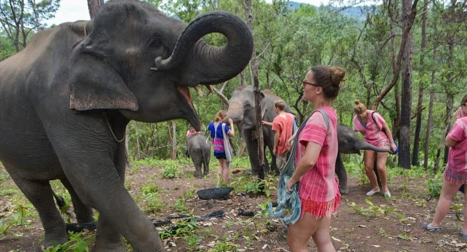 elephant camp mae wang
